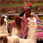 peru, llama, animals